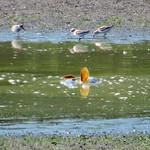 Fernhill Drought thumbnail