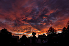 End of day..... (flying-leap) Tags: newzealand northcanterbury nz southisland the4seasons weather sky 4winter winter sunset dusk sony sonydscrx10m4 sonydscrx10iv sonyrx10iv fiery scavenger1