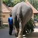 Elephant (1X7A4480b)