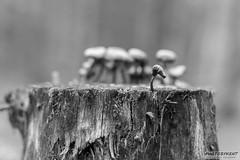 On the edge of the world (PhotoByKent) Tags: canon m50 sweden sverige dalarna bergslagen ue wood trä struktur structure cloud clouds forest skog tree träd photobykent fungus svamp