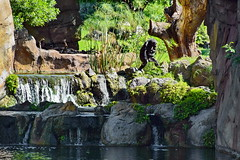 In a monkey's world (gerard eder) Tags: world travel reise viajes europa europe españa valencia spain spanien bioparc animals animales tiere tierpark zoo zoologico wasser water wasserfall waterfall landscape landschaft paisajes panorama park natur nature naturaleza outdoor