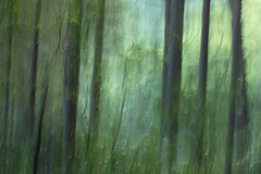 green light (birdcloud1) Tags: trees woods forest spring growth springgrowth light green intentionalcameramovement icm canoneos80d eos80d 50mm18lens canon50mm18 amandakeoghphotography birdcloud1 foreststories equinox