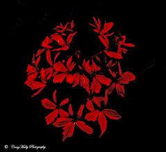 Red Dreams. (craig mally) Tags: beautysecret ~ perfect petals