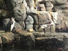 IMG_1262 (paschulea) Tags: monterey aquarium