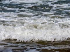 050-P1030835 LR (1gl) Tags: 2018 carpet carpets killer gumbo norfolk wintertononsea beach dogs coast