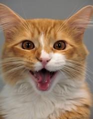One Happy Kitty... (catherine4077) Tags: cat feline spca happy adopt donate volunteer