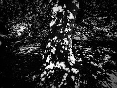 rnor80852.jpg (Robert Norbury) Tags: fuckit somearelandscapessomearenot icantbearsedkeywording fineartphotography blackandwhite photographer itdoesntmatterwhattheyarepicturesoftheyarejustpictures itdoesntmatterwhattheyarepicturesoftheyarejustpictur