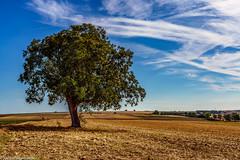 Mein Freund der Baum (J.Weyerhäuser) Tags: natur baum felder mainz acker himmel wolken