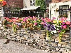 Flowers on a wall. (Bennydorm) Tags: barrier stonework stonewall august colourful colours inglaterra inghilterra angleterre europe uk gb britain england cumbria furness ulverston iphone6s bonito wall display attractive beauty lovely pretty floral flora flowers
