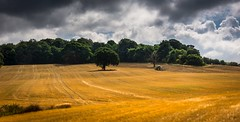 Fields of gold (Phil-Gregory) Tags: hardwickhall derbyshire nikon d7200 tokina tokina1120mmatx 1120mmproatx11 1120mm wideangle ultrawide field gold tractor trees clouds
