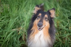 36/52 Leia & already smells like Autumn (shila009) Tags: leia perro dog dogportrait dogphotograpy smile 3652 green otoño autumm eyes
