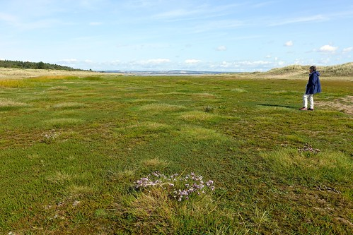 Very green saltmarsh contrasting with the dry dunes