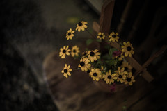the end of my summer (N.sino) Tags: m9 summilux50mm flowers karuizawa cafe summer 夏の終わり 花 終りの季節 軽井沢 さよなら