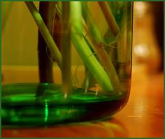 MM - glass - DSC_4723 (FMAG) Tags: macro glass macromondays