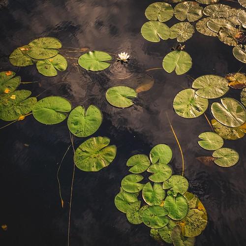 Tipping my toe in to Flickr #finland #suomi #finnishphotography #nature #fuji #fujifilm #fujixseries #x100series #fujifeed #fujix100 #fujix100s
