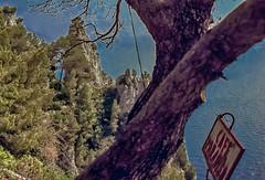 90-03 pan fels capri paradiso steil ag30-132 (ulrich kracke (many thanks for more than 1 Mill vi) Tags: i baumkronealt capri hd8 paradiso schildalt steilküste