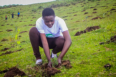 Mau Forest Restoration (Global Landscapes Forum) Tags: people reforestation planting climatechange mitigation clearedarea restoration localpeople human humanbeing humanbeings humans person elburgon nakurucounty kenya ke event photocompetition glf2018nairobi