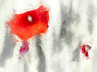 1510  Poppies (1)