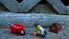 Pull!! (258/365) (robjvale) Tags: d3200 nikon adventurerjoe lego project365 carrot orange grow garden wheelbarrow crate
