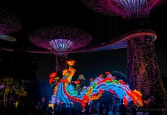 The Phoenix at the Super Tree (TheViewDeck) Tags: phoenix peony lantern festival supertree lights city singapore