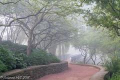 Into the fog (SF knitter) Tags: chicagobotanicgarden cookcounty cookcountyforestpreserves eveningisland illinois bridge crabapple fog garden mist morning preserves