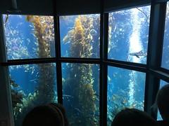 IMG_1256 (paschulea) Tags: monterey aquarium