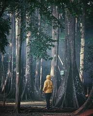 Situ Gede, Bogor. Indonesia _____ Foto: @abee_aries ______________________ www.travelmate.today Online Catalogue Travel Pasang GRATIS produk wisata kamu dan tingkatkan penjualan! _____ Tags: #travelmatetoday #exploreindonesia #jelajahindonesia #indonesia (Travelmate Today) Tags: travel travelmate indonesia nature instagram