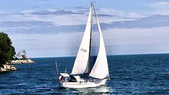 Sailing boat (i_kaya@rogers.com) Tags: lake park canada ontario toronto photograph photography lighthous
