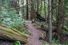 2018-08-18 Whistle Lake Trail 205 (16) (1024x680) (-jon) Tags: anacortes skagitcounty skagit fidalgoisland sanjuanislands washingtonstate washington pnw pacificnorthwest salishsea pugetsound acfl anacortescommunityforestlands whistlelake lake trail path 205 nikon nikonl22 tree douglasfir fern alder summer woods forest a266122photographyproduction hiking hike walk walking
