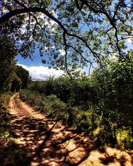 ...and just down the lane from the flowers... (jonmacephotography) Tags: countryside sunny track toad landscape journey path tree