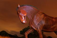 War Horse Memorial (Yorkshire Pics) Tags: featherstone millpondmeadow warhorse horsesculpture horse sclupturehorse steelhorse warmemorial warmemorialhorse horsememorial featherstonewarmemorial featherstonewarhorse warhorsesculpture featherstonewarhorsesculpture horsesculptureatnight warmemorialatnight ww1memorial codsteaks warhorseatnight warhorsememorial warhorsememorialatnight pontefract featherstoneatnight 2208 22ndaugust 22ndaugust2018 22082018 lightpainting