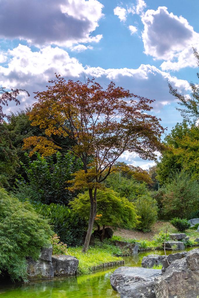 Japanischer Garten Bietigheim  2 (CitizenOfSeoul) Tags: Grün Baum Bonsai