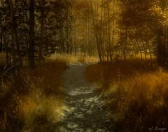 Upper Twin Lakes, Ca (J.R. Krueger) Tags: twinlakes eastern sierranevadamountains fall aspen trees
