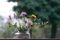 August at the end (Shahrazad_84) Tags: flowers calabria italy nature bokeh 50mm