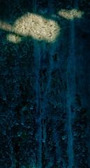 Glass Flowers 3 (CactusD) Tags: landscape nikon d800e movements detail texture lightfx uk unitedkingdom gb united kingdom greatbritain great britain derbyshire england fuji film fujifilm fujichrome velvia velvia50 5x4 4x5 85mmf28pce tilt shift tiltshift 85mm 85pce digitized linhof technikardan tks45 s45 nikkorw210mmf56 nikkorw 210mm f56 closeup abstract glass horticulture gardening glasshouse botany greenhouse