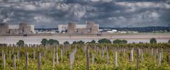 La Gironde river, vineyard on the borders. (Only photoshoot, don't be afraid) Tags: vineyard wine hautmedoc bordeaux merlot river aquitane france vin wijn gironde appelation rebe pieddevigne pays de vignobles