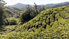 IMG_20180824_093551 (IVO & MICHELE) Tags: cameron highlands