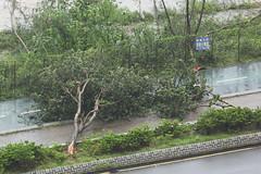 Super Typhoon Mangkhut, Tseung Kwan O, Hong Kong (Daryl Chapman Photography) Tags: storm typhoon hurricane hongkong china sar canon 5d mkiv 100400lii super supertyphoonmangkhut