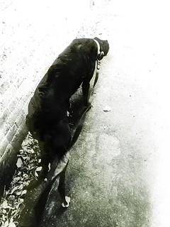 A greyhound waits for no man...