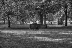 Sept160918BW0004 (RightCharlie100) Tags: blackandwhite blackwhite bw plymouth candid trees