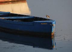 Barques_DSC_6308_01 (gilmartinmiquel) Tags: barca badiadelsalfacs deltadelebre deltadelebro ebrodelta