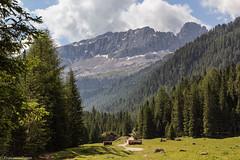 In val Contrin (cesco.pb) Tags: valdifassa valcontrin dolomiten dolomiti dolomites alps alpi trentino italia italy cimauomo cimecadine canon canoneos60d tamronsp1750mmf28xrdiiivcld montagna mountains
