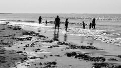 Summer fun (halifaxlight (back in Nov)) Tags: canada novascotia easternshore conradsbeach beach sea people paddling waves seaweed summer bw dog silhouettes