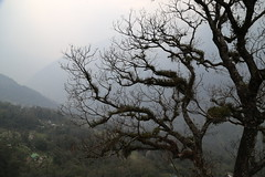 IMG_3995 (Beautiful Creation) Tags: india bagdogra darjeeling pelling yuksom gangtok lachen chopta valley lachung