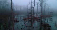 906189702 (tanyapavlicapschyrembel) Tags: gloomycreepymist fortpayne alabama unitedstates usa gloomy creepy mist
