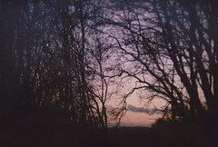 . (SoWiL(d)) Tags: trees landscape dusk analog 35mm silence nostalgia