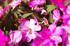 JLF15633 (jlfaurie) Tags: lucila agosto 082018 château castillo castle maintenon jlfr mpmdf mechas jlfaurie pentaxk5ii jardin garden flower flores fleur intérieurs parc