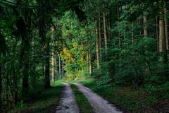 untitled . (helmet13) Tags: d800e raw insideforest foresttrack forest trees wood latesummer silence peaceful aoi peaceaward world100f platinumpeaceaward