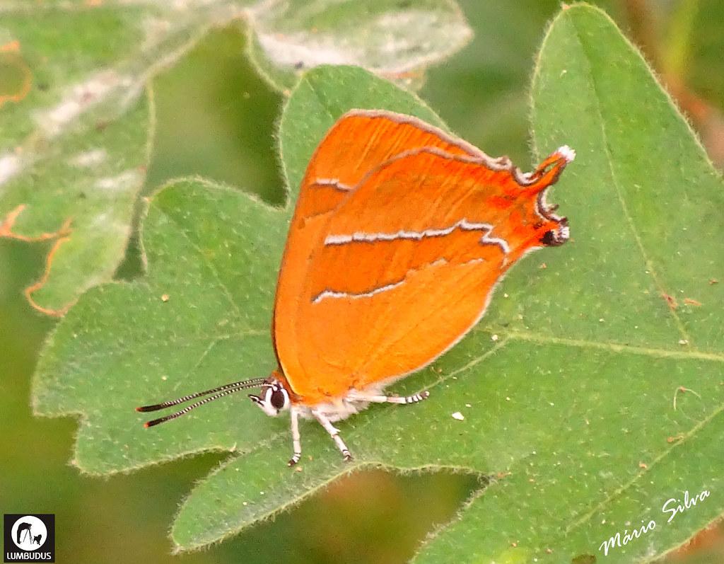 Águas Frias (Chaves) - ... borboleta na sua Vida efémera ...
