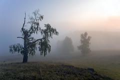 Утро #своифото, #пейзаж, #природа, #утро, #рассвет, #дерево, #натура, #восход, #sunrise, #nature, #tree, #Landscape, #sun, #туман, #лучи, #foggy, #природа, #небо, #небоголубое, #сониальфа, #сониа6000, #sonyalpha, #sonya6000, #natgeoru, #natgeorussia, #nat (ЛеонидМаксименко) Tags: natgeorussia сониа6000 сониальфа пейзаж восход sonyalpha небоголубое утро sonya6000 лучи natgeoru foggy tree nature небо landscape природа натура дерево sun natgeoyourshot рассвет своифото туман sunrise